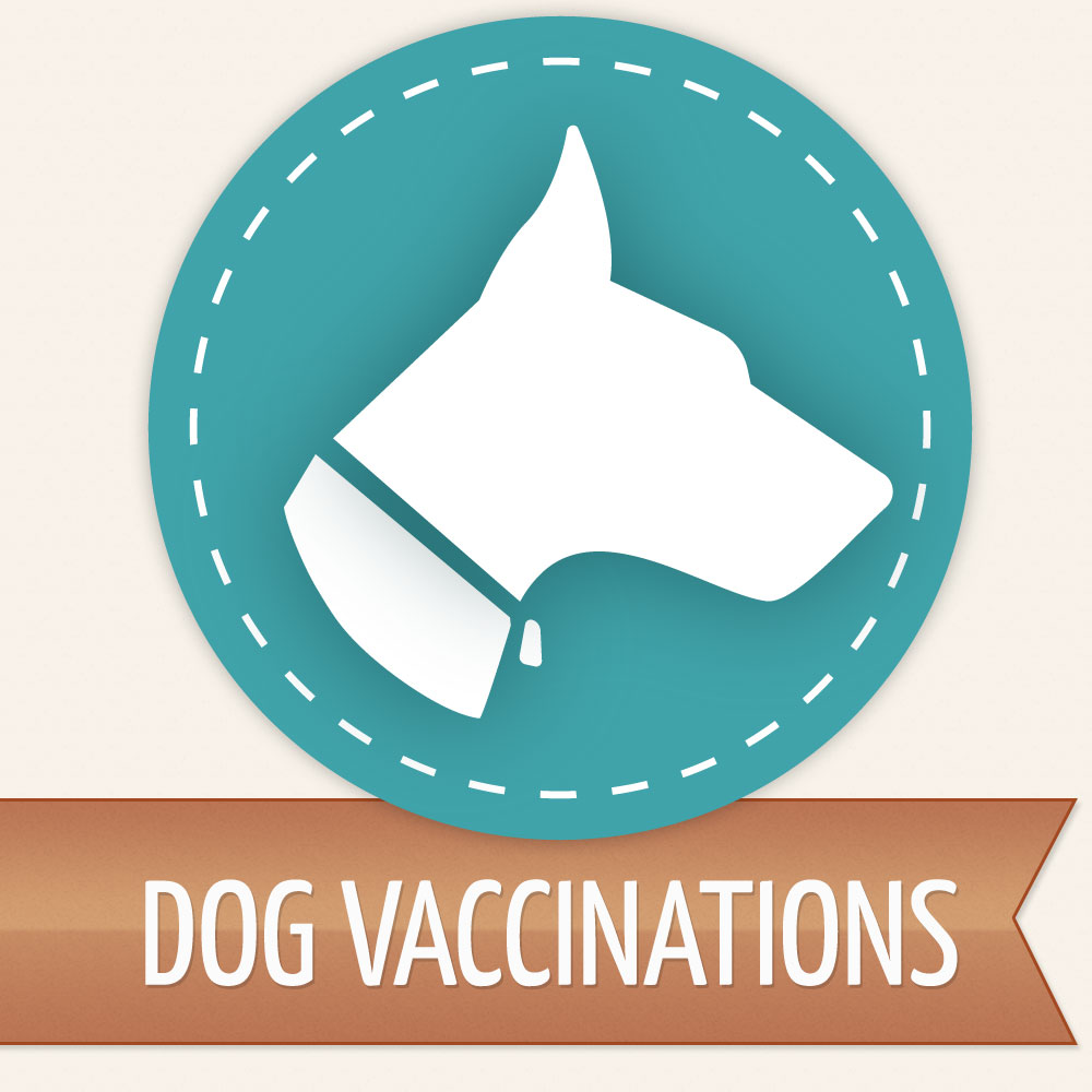 what is the lepto vaccination for dogs