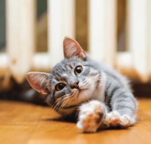 cat-main-pic