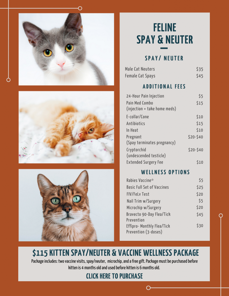Cat Spay Neuter Tcap Affordable Spay Neuter And Vaccinations